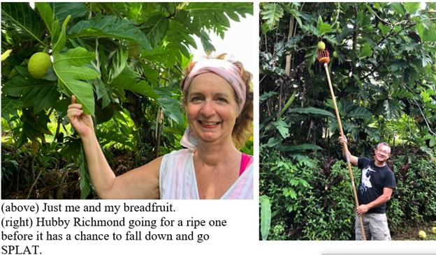 Hawaii breadfruit1